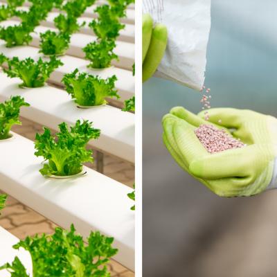 Nutrientes Verduras (Mezcla plantas)