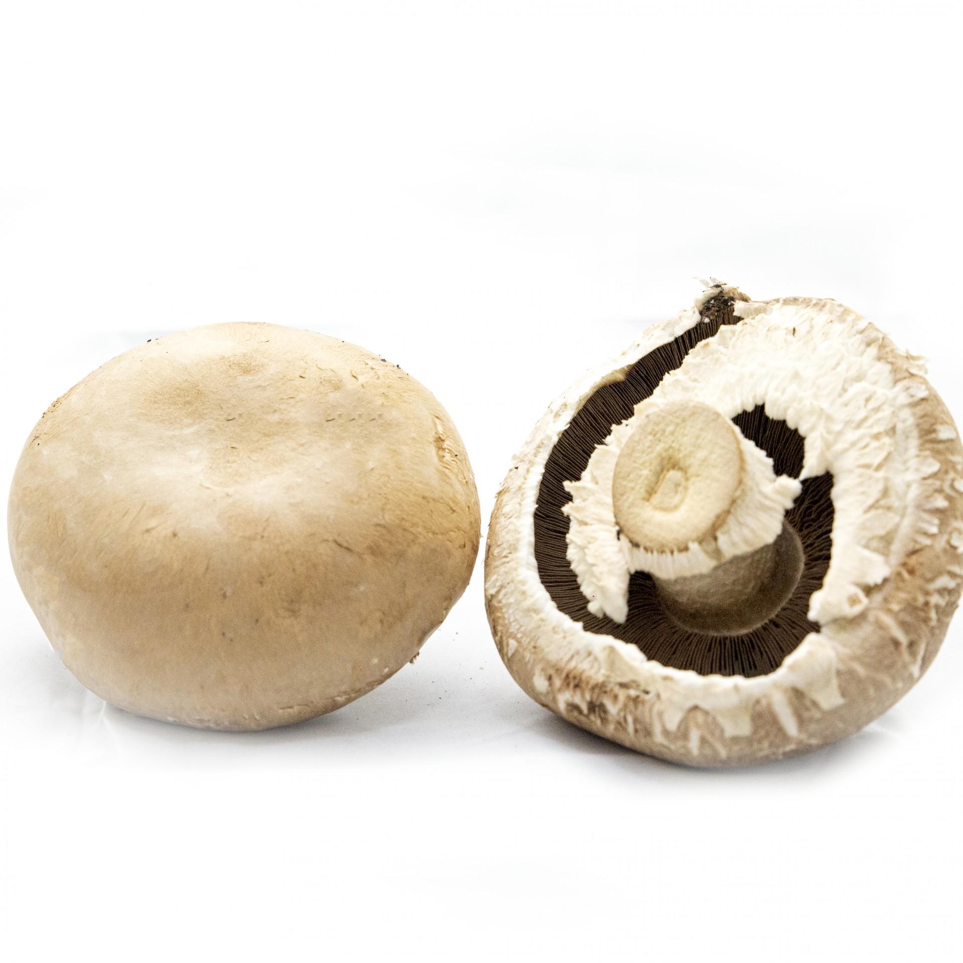 Cogumelo Portobelo