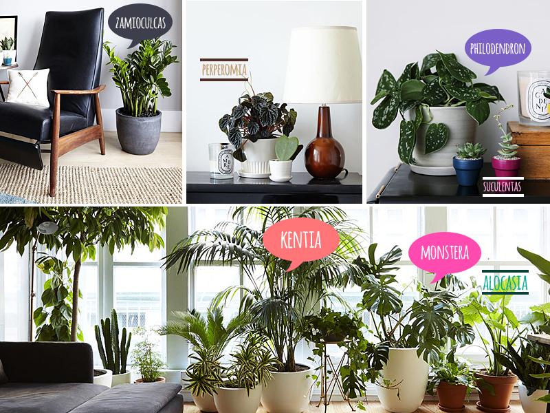 As plantas e a cidade