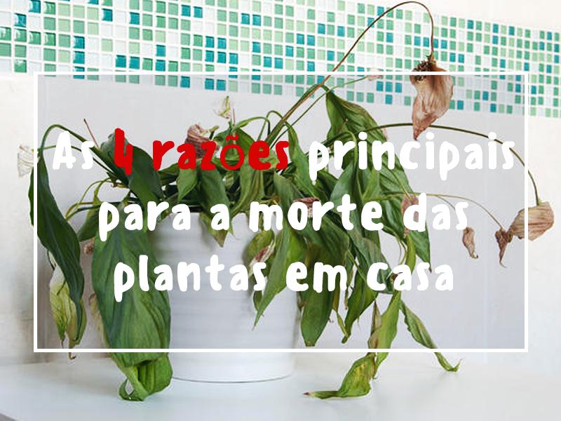 As 4 razões principais para a morte das plantas em casa
