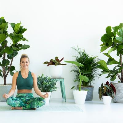 OMMM… 7 Plantas para meditar