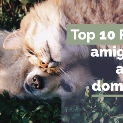Top 10 plantas amigas dos animais domésticos