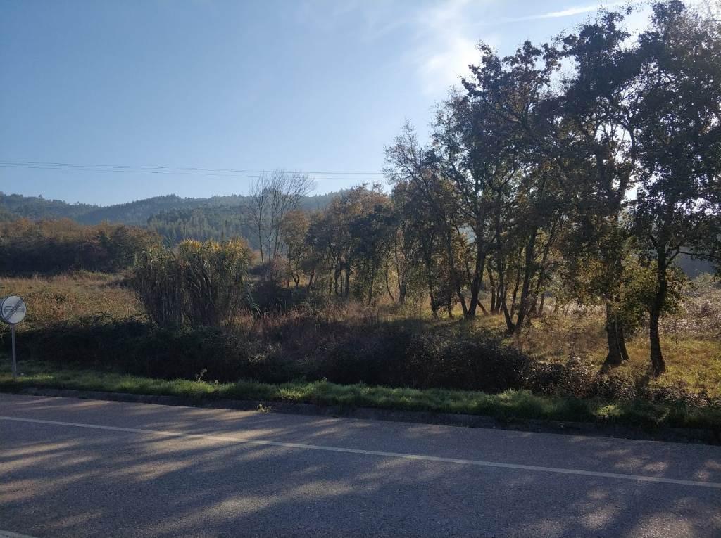 Terreno para Construção no Espinhal - Penela