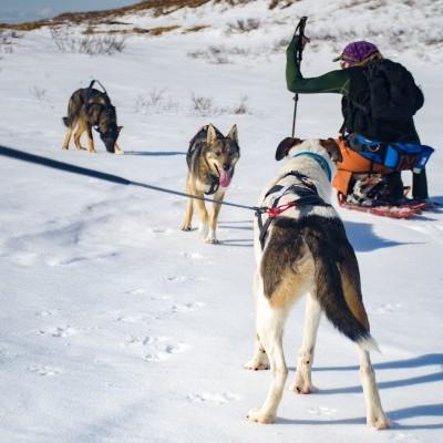 Arnês Non-stop Dogwear Nansen Nome 5.0