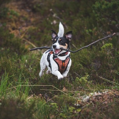 Arnês Non-stop Dogwear ULTRA