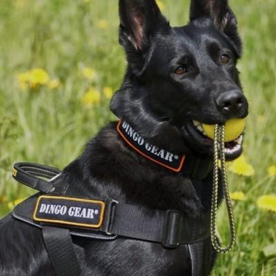 Arnês para cães com fita NYLON DINGO GEAR