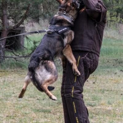 Fato de protecção leve com couro ecológico para treino DINGO GEAR