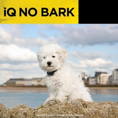 iQ No Bark- Rosa