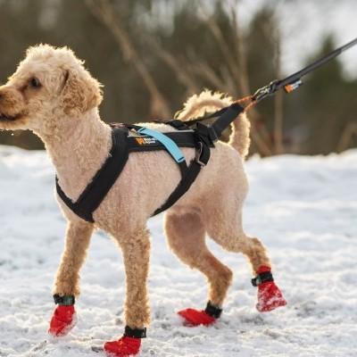 Arnês Non-stop Dogwear Freemotion