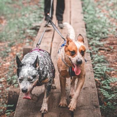 Trela TOURING DOUBLE da NON-STOP Dogwear