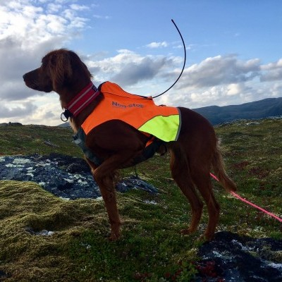 Colete PROTECTOR GPS da NON-STOP Dogwear