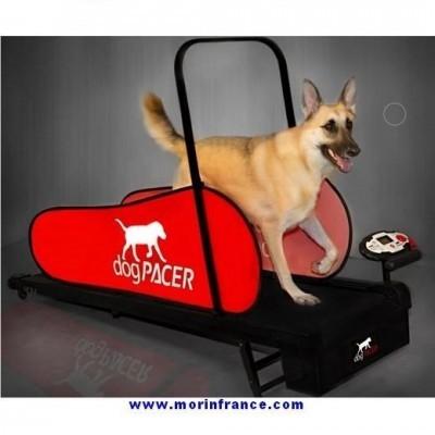 Tapete Rolante Home Trainer para cães DOG PACER