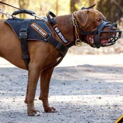 Arnês para cães  SYSTEM COBRA EXTREMO DINGO GEAR