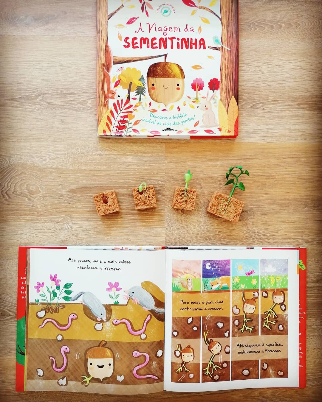 Pack Ciclo de Vida da Planta