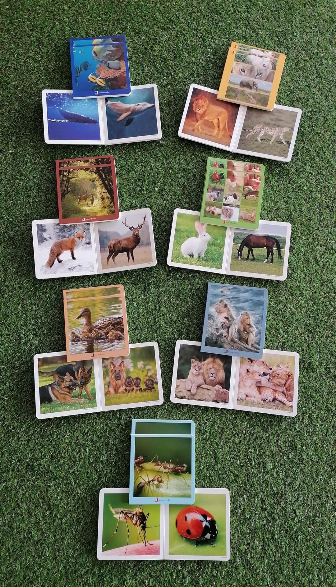 Pack 7 Livros Imagens Reais (animais)