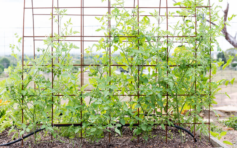 treliças plantas