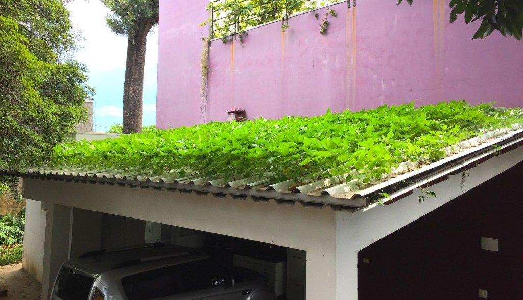 Agrónomo brasileiro cria primeira telha hidropónica do mundo
