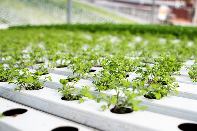 espaçamento entre plantas