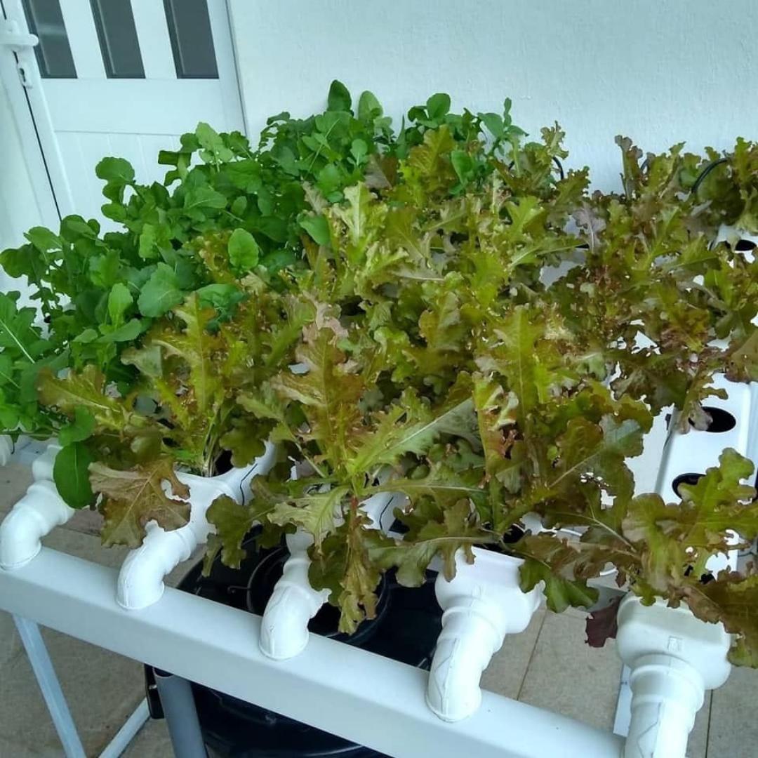 horta hidroponia