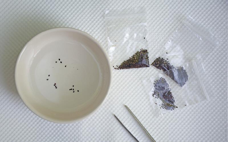 sementeira hidroponia