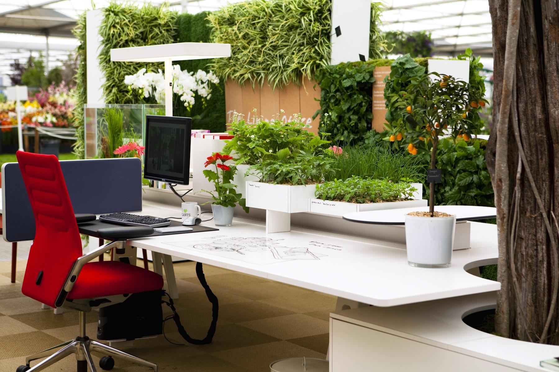 4 formas em como as plantas aumentam a produtividade