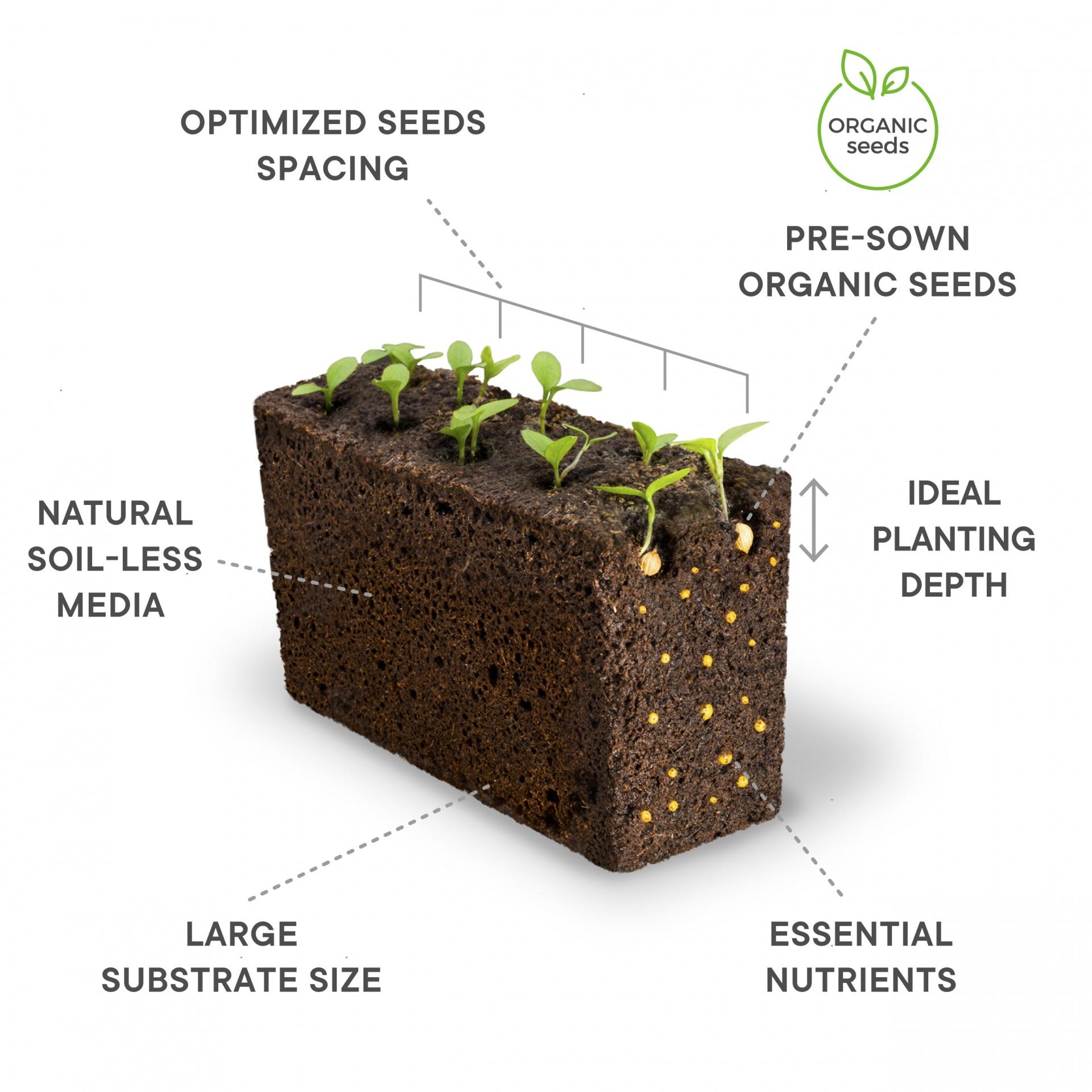 sementes hortas caseiras