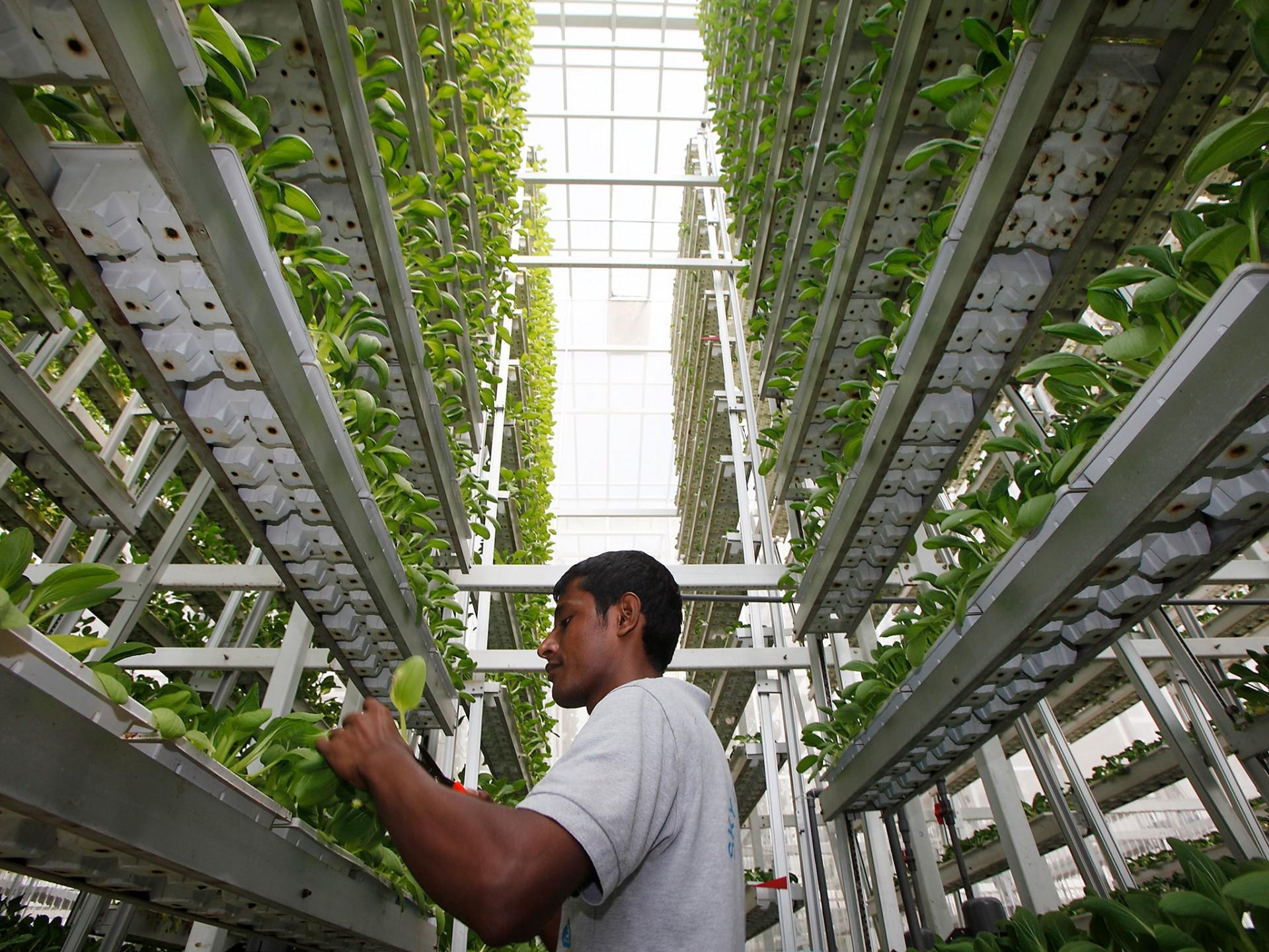 O papel da agricultura vertical na procura por práticas sustentáveis