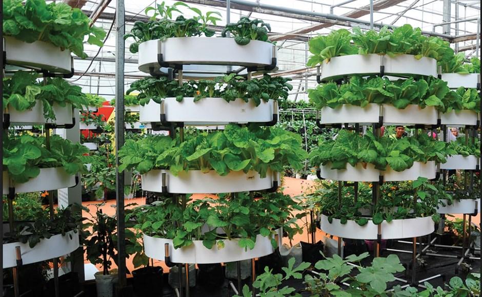 Horta em Casa: Sistema Vertical