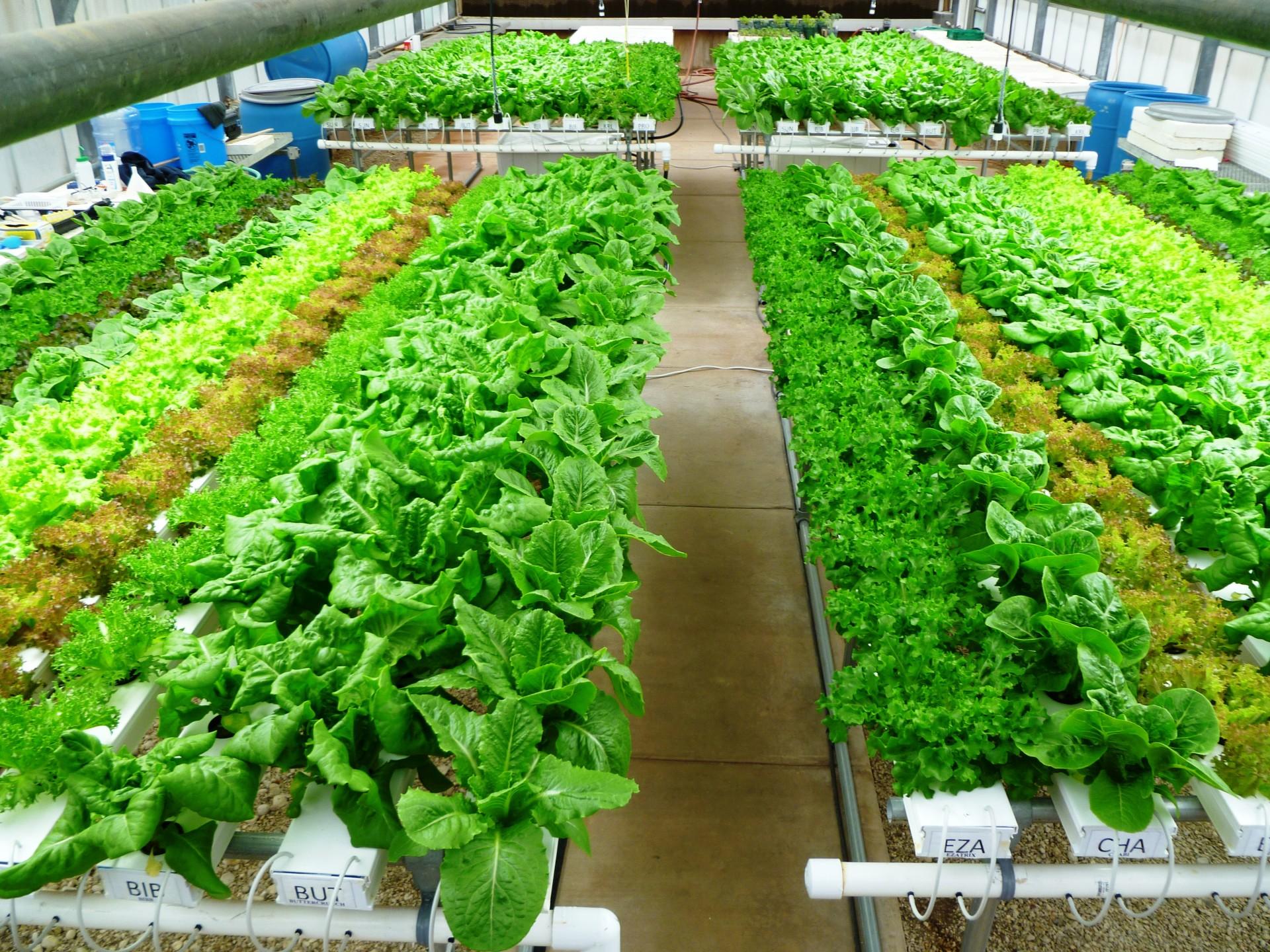 Benefícios de cultivar em NFT