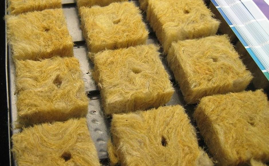 Como cultivar em lã de rocha?