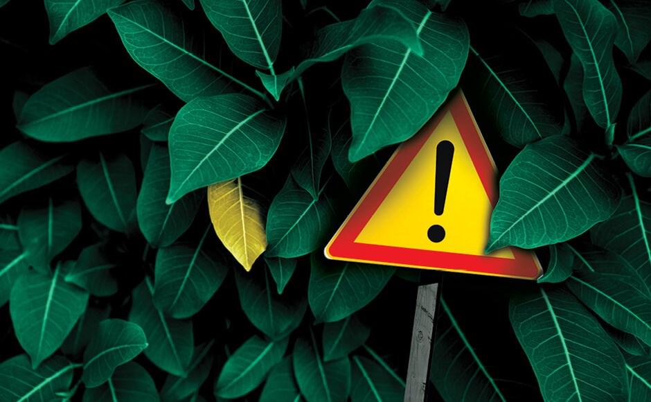7 razões para folhas amarelas