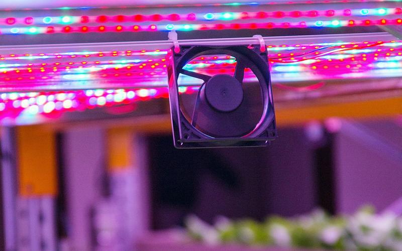 ventiladores estufa hidroponia