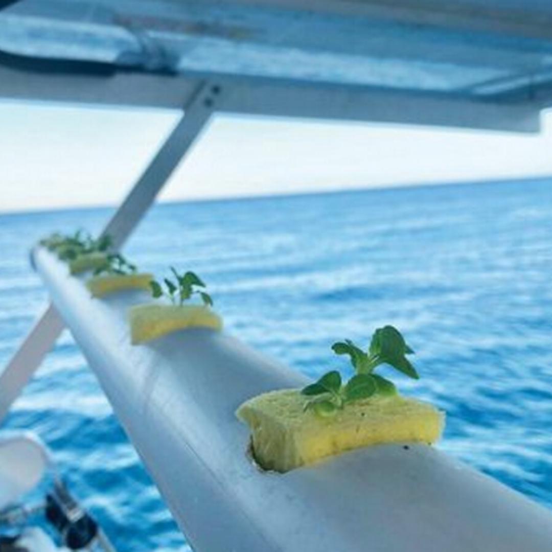 Hidroponia a bordo de um barco
