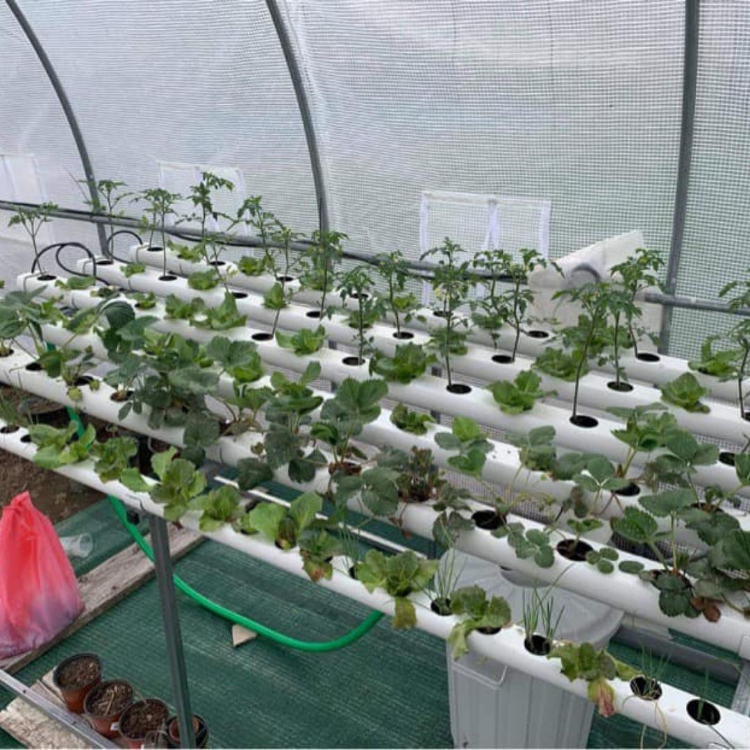horta 110 plantas