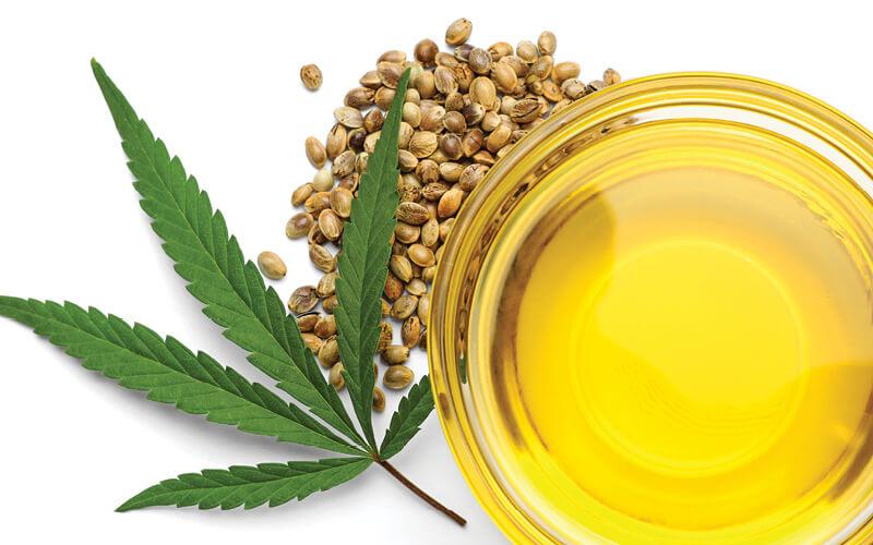 óleo cannabis