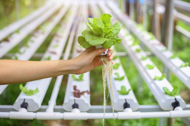 Cuidados a ter com a solução nutritiva em Hidroponia