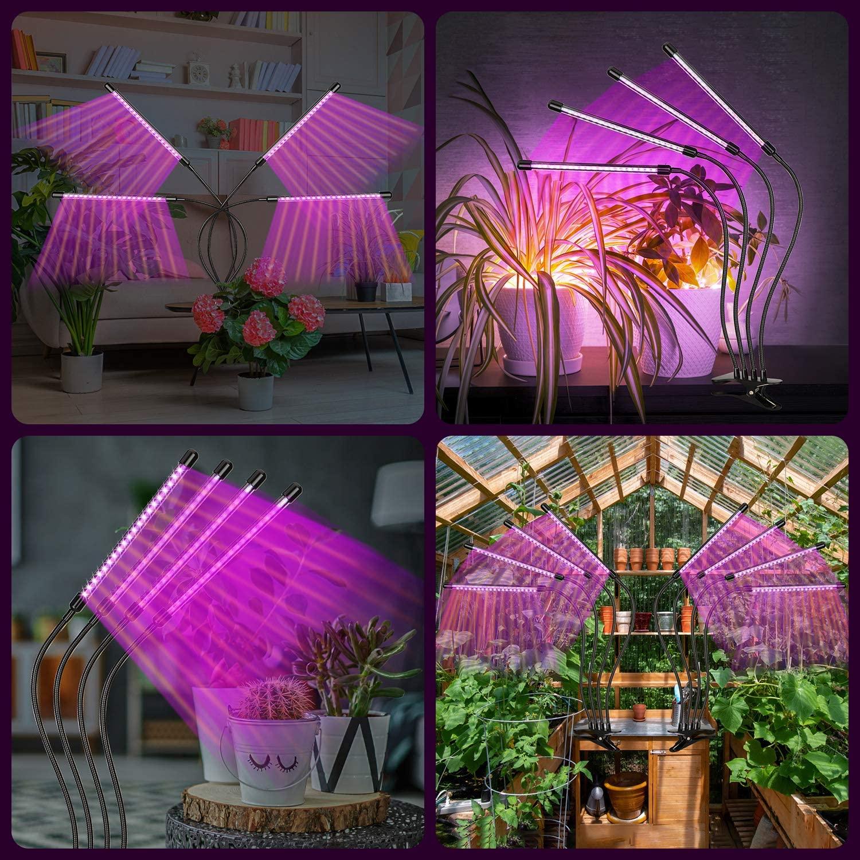 iluminação plantas