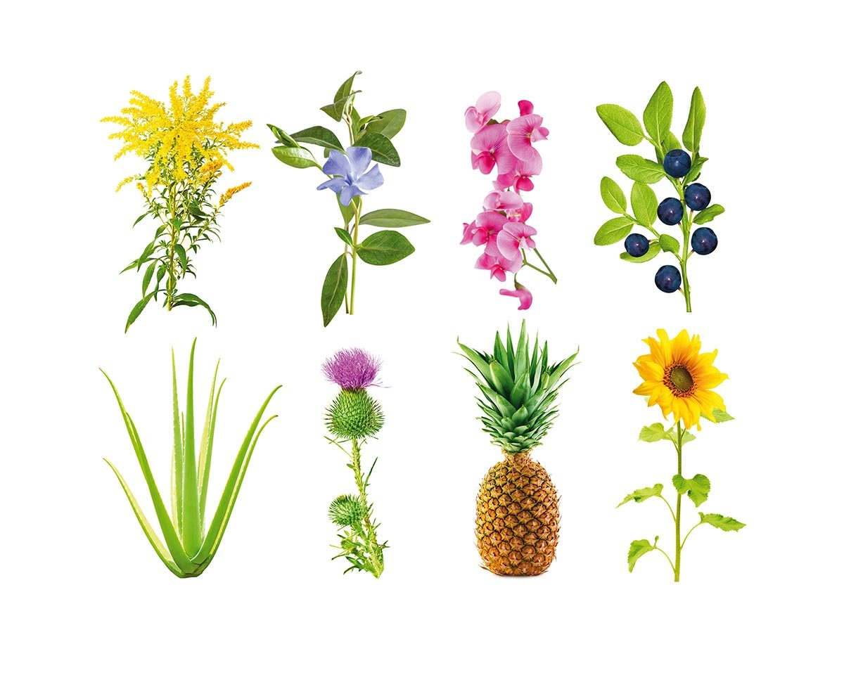 sementes smart garden