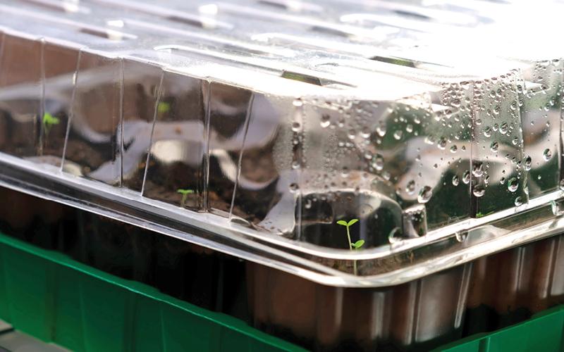 germinar plantas hidroponia
