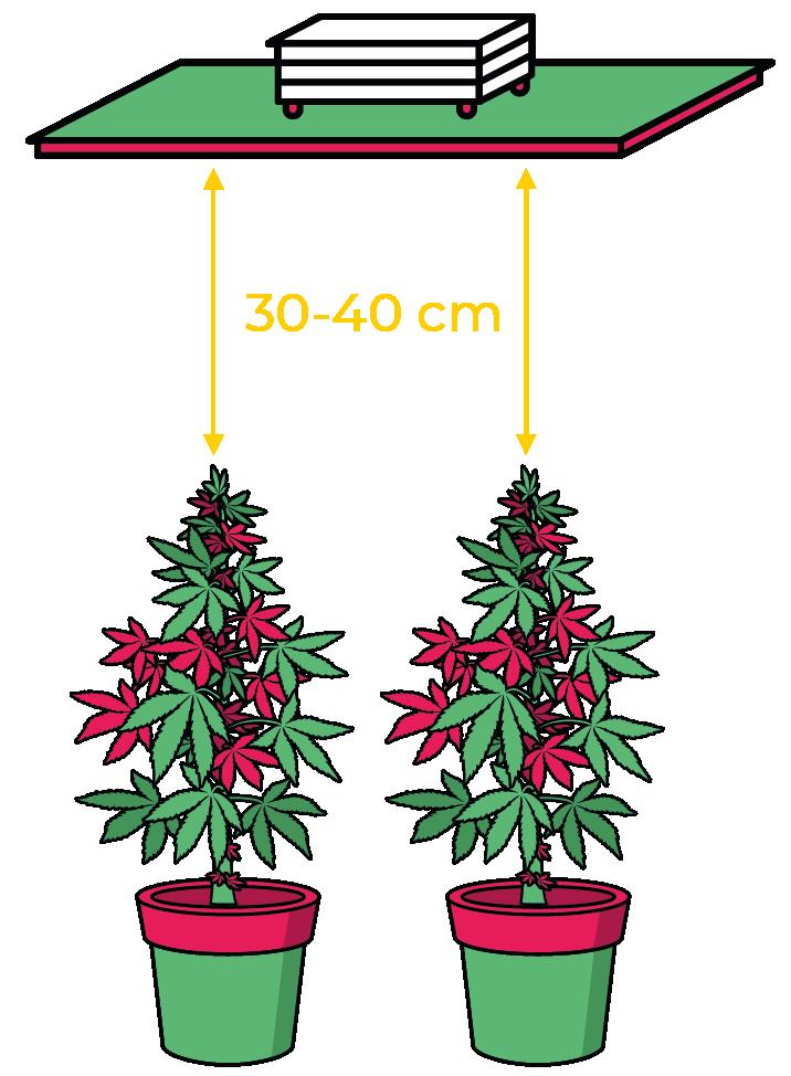 iluminação led plantas