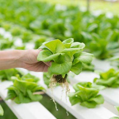 Nutrientes folhosas (Mix plantas)