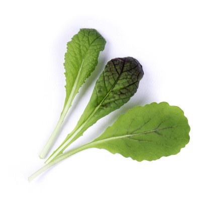 Mostarda Verde Orgânica