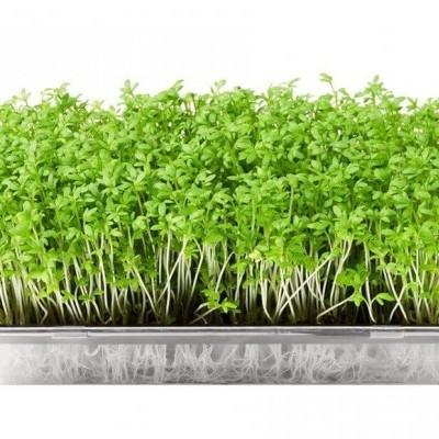 Microgreens Hidropónicos