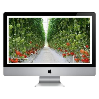 Curso Online - Cultivo de Tomate