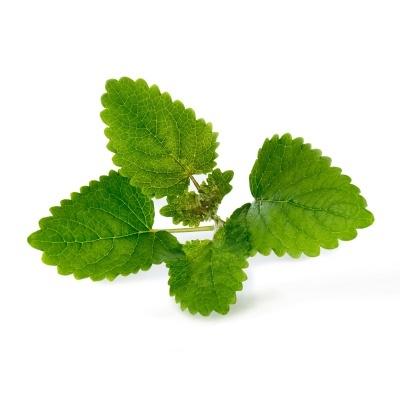 Erva-Cidreira Orgânica