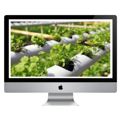 Curso Online - Plantas Medicinais e Condimentares