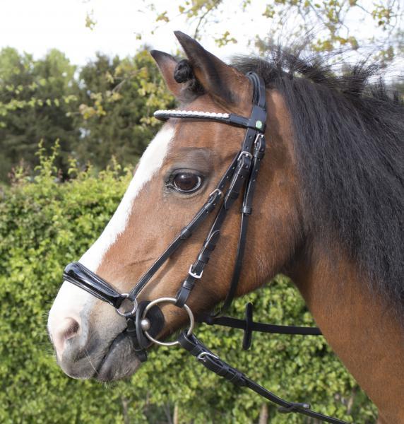 Cabeçada Pony Ijone, LJ