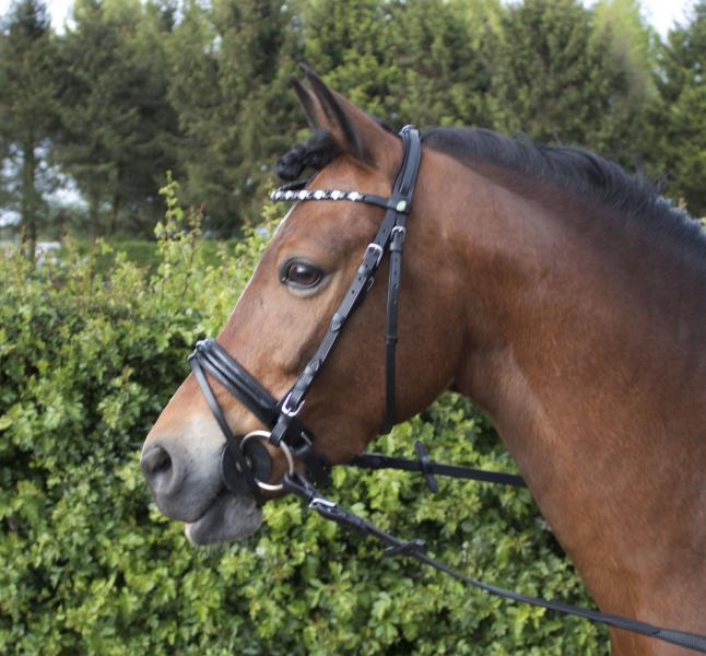 Cabeçada Pony Jolibeau, LJ