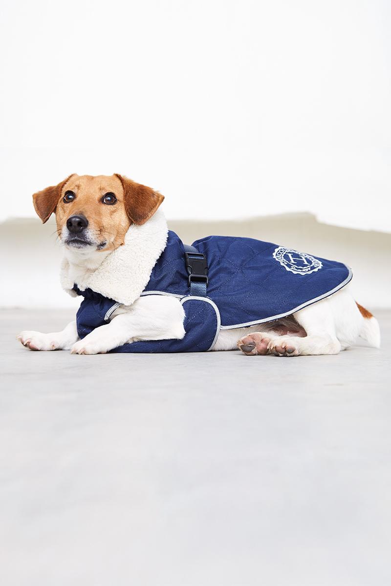 Joly manta para cão, Harcour