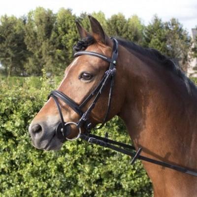 Cabeçada Pony Diamond,LJ